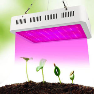 meilleure lampe de croissance pour plante